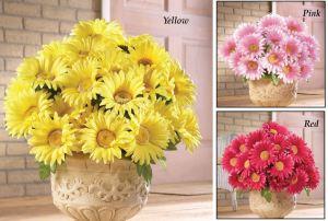 Floral Gerbera Daisy Bushes